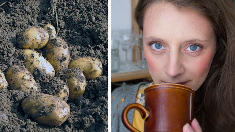 Potatis och Malin Randeniye. Foto: Joacim Lindwall/Sveriges Radio och Malin Randeniye.