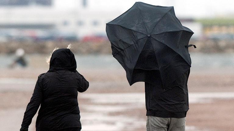 Hårda vindar och regn på tvären på i hamnen i Malmö 2008. Ett kraftigt lågtryck med hårda vindar och regn drog in över södra Sverige Foto: Johan Nilsson/TT.