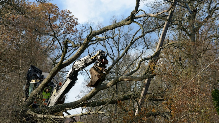 Träd, som fallit över en elledning, tas bort med grävmaskin i skogen. Foto: Johan Nilsson/TT.
