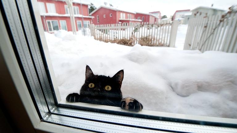 Katt utanför fönster. Foto: Pontus Lundahl/TT.