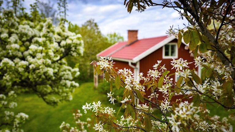 Säljaren kan få mer för fritidshuset efter lövsprickning, enligt mäklare.