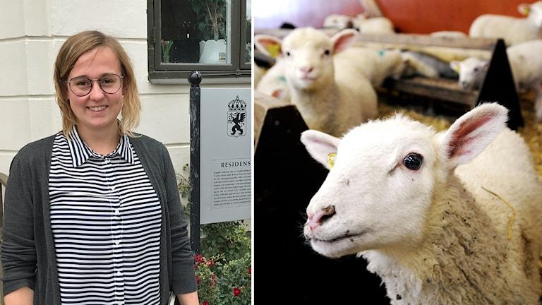 Karin Larsson och får.