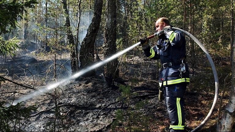 en brandman med slang sprutar i bränd skog.