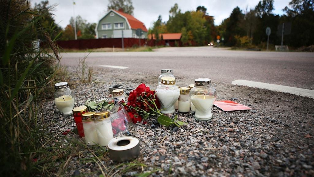 Blommor och ljud intill vägen.