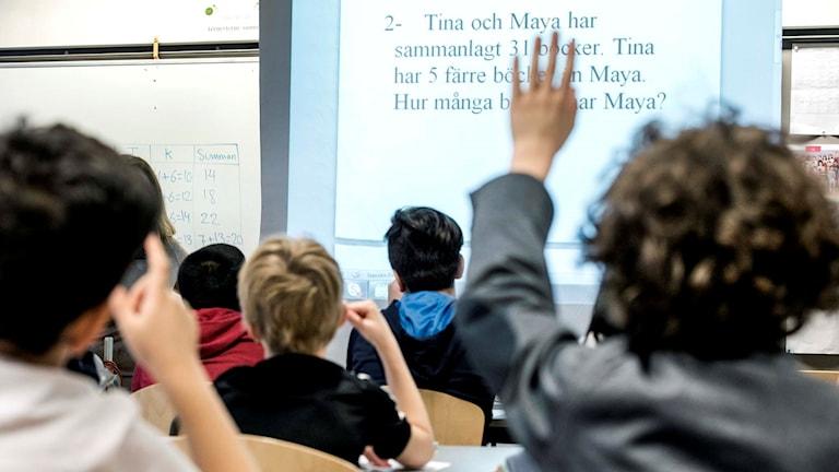 Skolklass bakifrån i ett klassrum. Elev räcker upp handen. Lars Pehrson/TT.