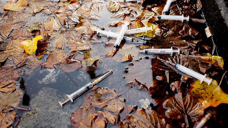 sprutor på marken.