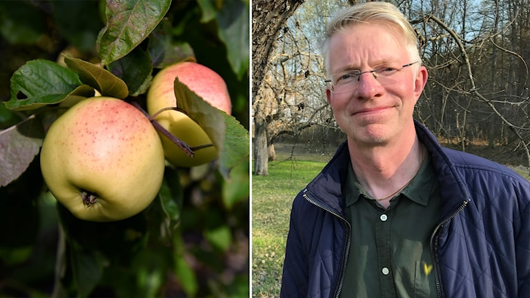 Patrik Andersson har köpt in tusen äppelträd till Sundbyholm.