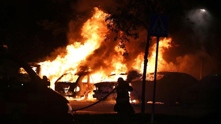 Fyra bilar brinner. Foto: Filip Lundh