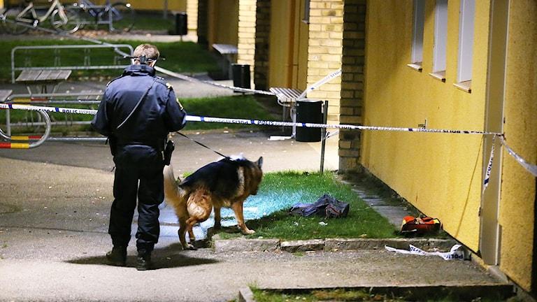 Polis och hund och avspärrning vid hus