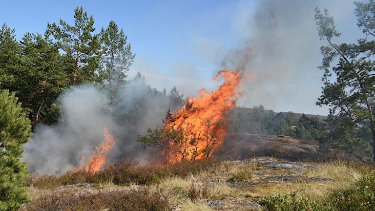 Skogsbrand i Rosenkällaområdet i Nyköping.