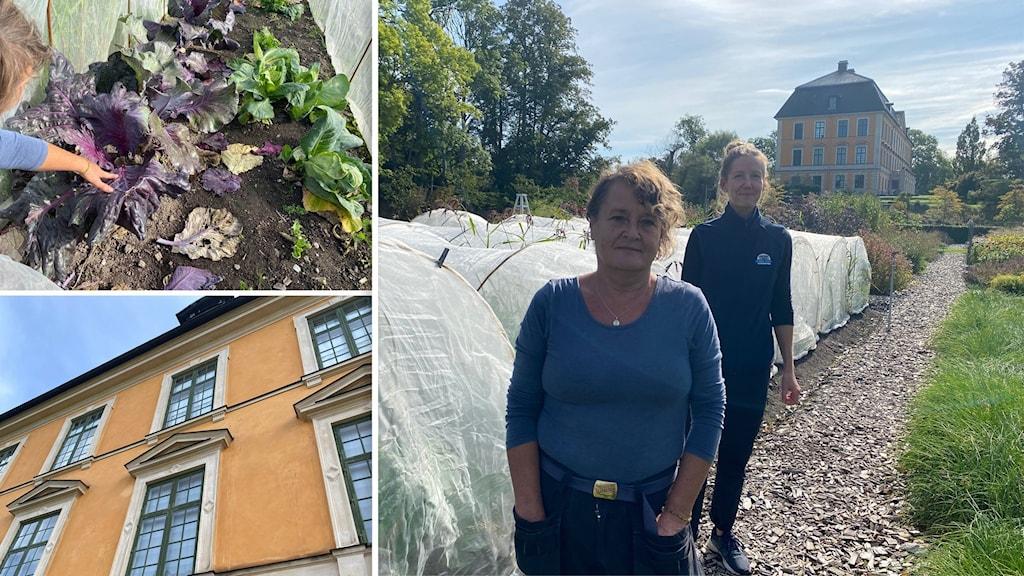 Längst fram:  Åsa Aulin, trädgårdsarbetare. Längst bak: Susanna Harjula, intendent Nynäs slott