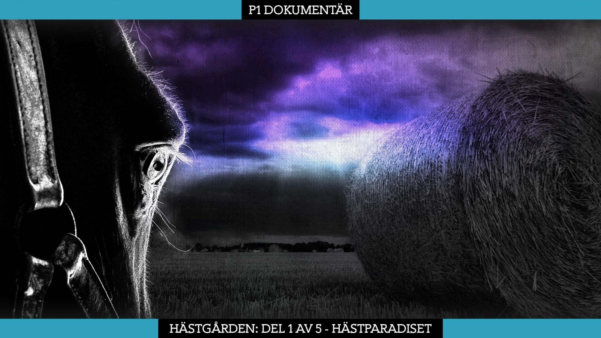 Del 1/5. Hästgården – Hästparadiset