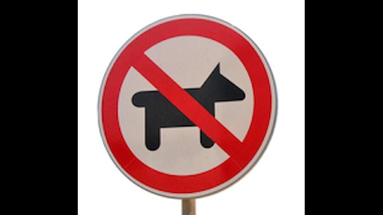 Hund förbjuden