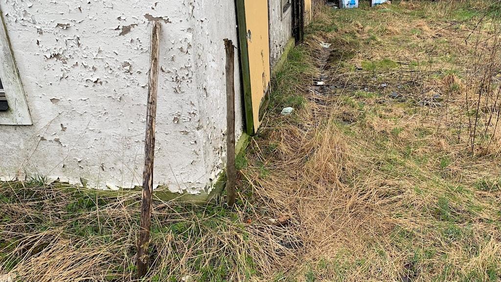 Gräs och en husvägg