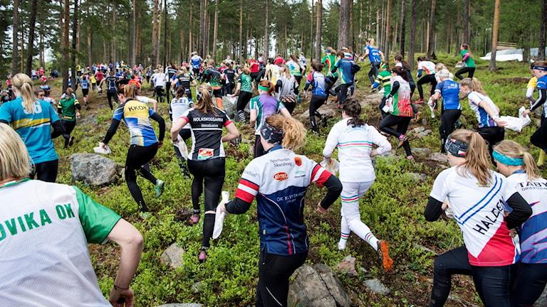Många orienterare springer i en skog.