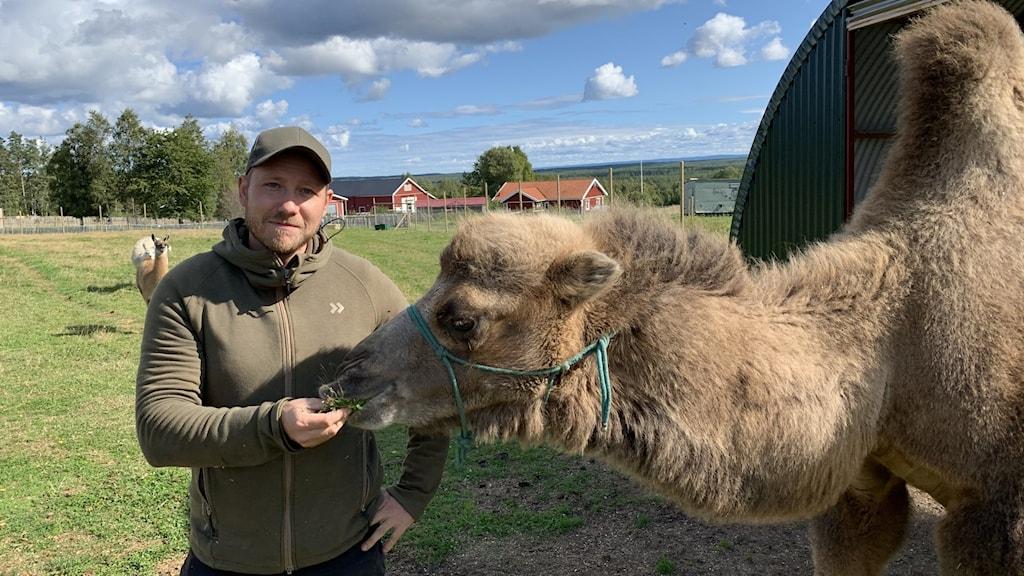 Bild på Eric Olofsson som matar en kamel.