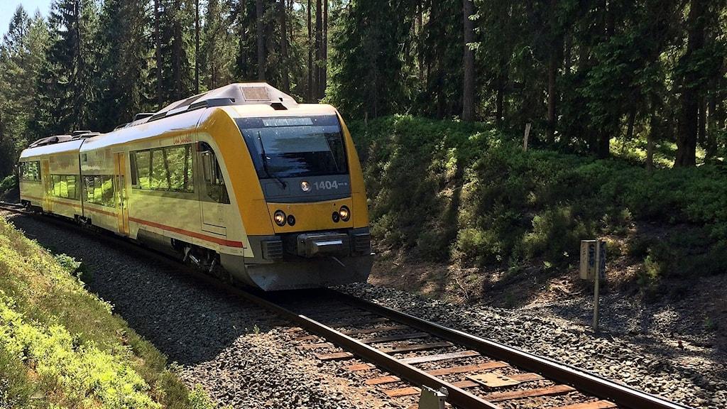Ett gult Krösatåg kör igenom blåbärsskogen