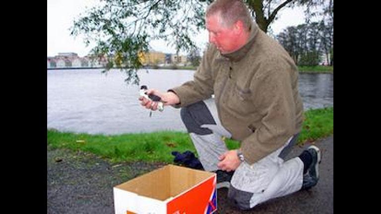 Peter Berglin håller i Alkekungen. Foto Pernilla Arvidsson