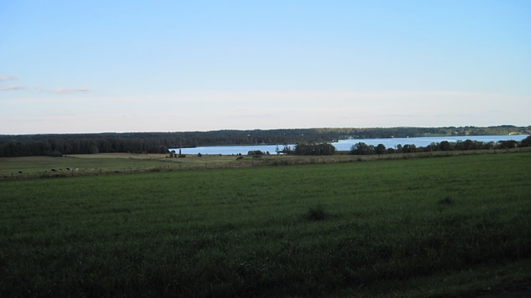 Osudden vid norra delen av sjön Vidöstern utanför Värnamo. Foto: Karin Malmsten/Sveriges Radio