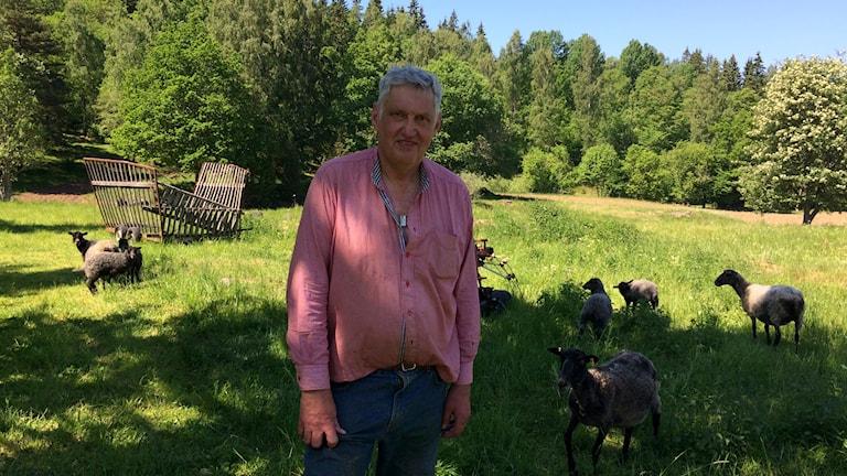 Anders Råsberg står i en fårhage.