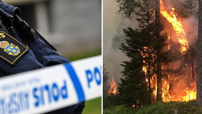Arkivbilder på polisperson stående vid avspärrningsband och ett träd som står i brand.