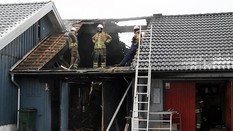 Brandmännen fick såga upp taket på huset för att komma åt alla brandhärdar. Foto: Paul Zyra/Sveriges Radio.