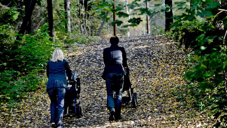 Promenad i skog. Foto: Pontus Lundahl/TT