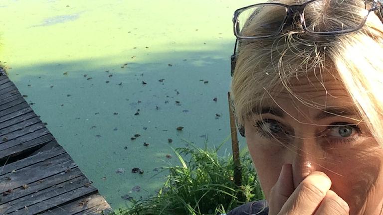 Barnarpasjön är grön av alger och luktar inte gott.