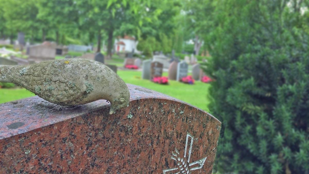 Kyrkogård. Foto: David Westh/Sveriges Radio