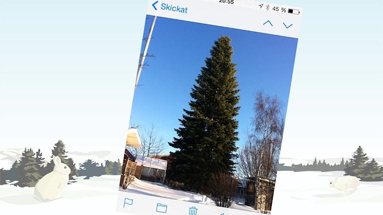 Gran i Mullsjö. Foto: Roger Anehagen