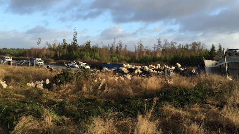 Hönor på vägen efter olyckan Foto: Toni Galic/Sveriges Radio
