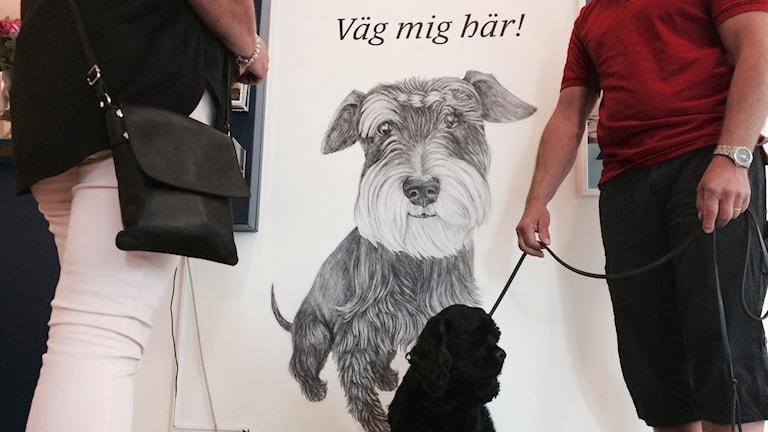 """En svart mellanstor hund sitter på en våg. Övanför vågen står det: """"Väg mig här""""."""