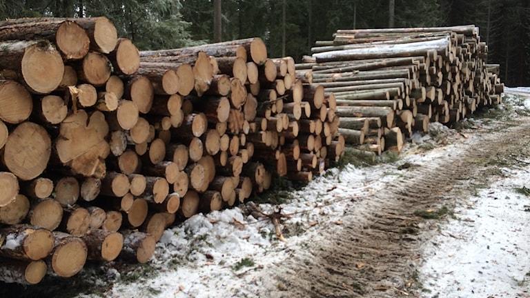 Massor av nedsågade träd staplade i högar i vinterskog.