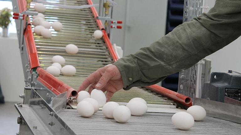 Ägg på ett transportband.
