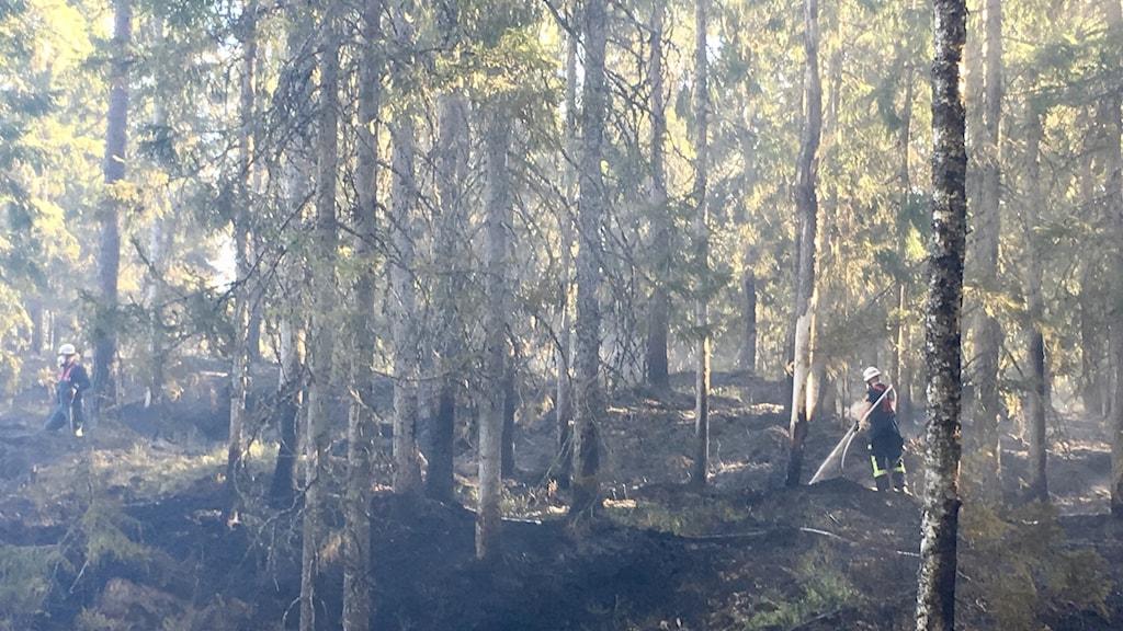 Skogsbrand Gislaved Hestra