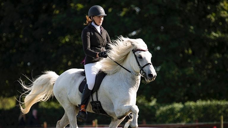 SM-finalist i islandshästar Anna Jonasson med sin häst Garri frá Fitjum.