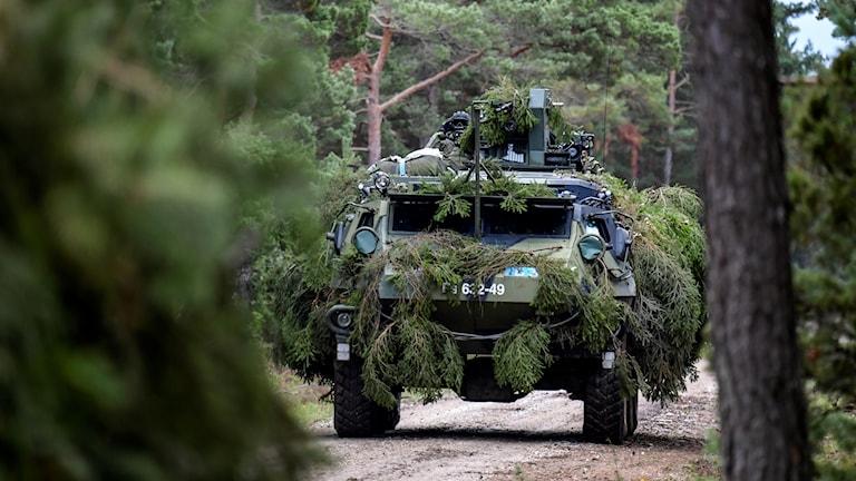 Ett militärfordon täckt av trädgrenar kör på en skogsväg.