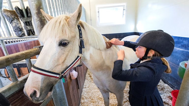 En flicka kammar en vit häst i ett stall.