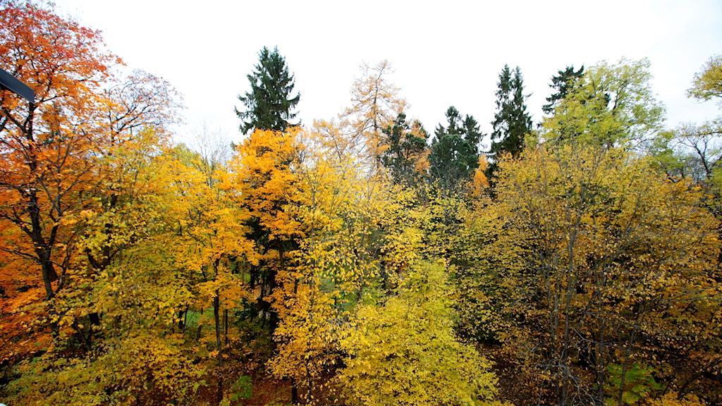 skog under hösten