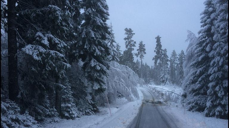 Bild på skogväg med mycket snö