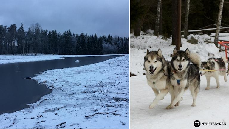 En montagebild över en å och en hundspann.
