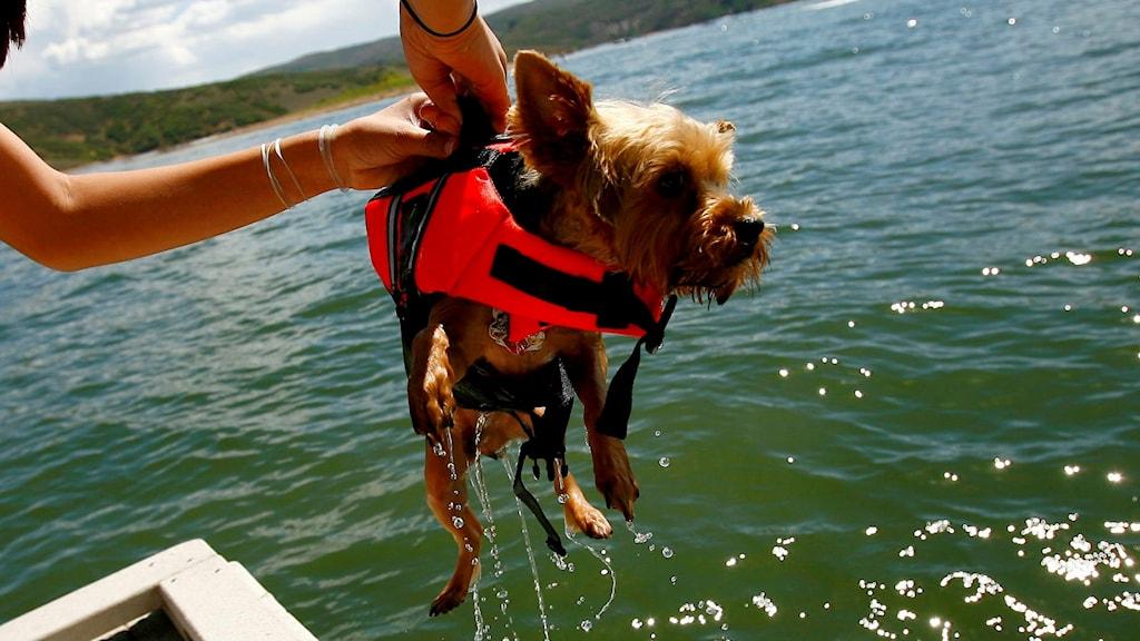 Flytväst hund