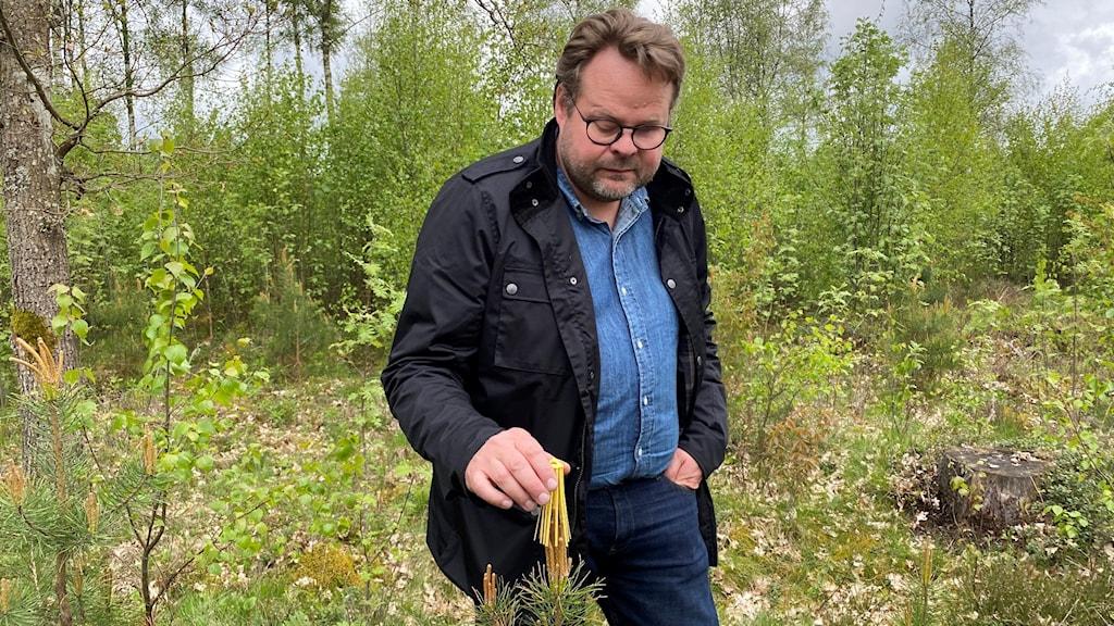 En man står i skogen bredvid en tallplanta.