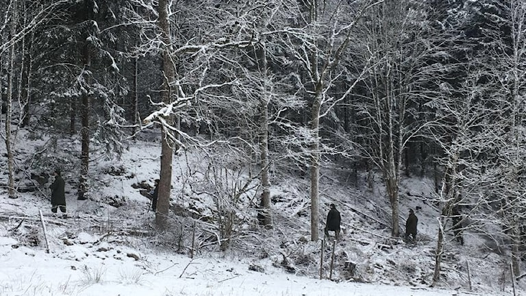 Människor söker i skog i Eksjö. Foto: Arkivbild, Simon Isaksson/Sveriges Radio.