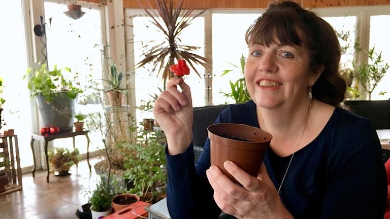 Susanne Smedberg håller i en chilifrukt och en planteringskruka med jord i.