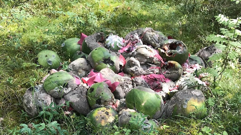 Ruttna meloner på gräs.