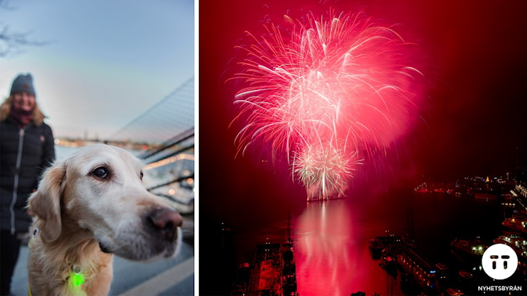 Hundar och nyår