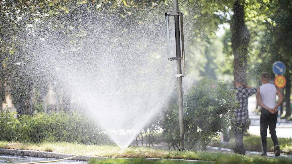 En vattenspridare i en kommunal park