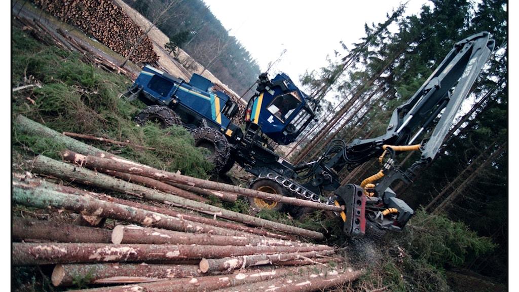 Skogsmaskin i skogen. Foto: Fredrik Persson/TT Nyhetsbyrån.