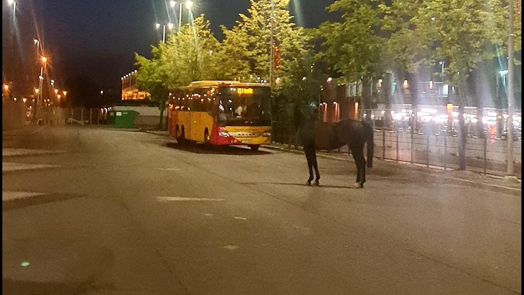 Häst står på asfaltsplan vid stationen.